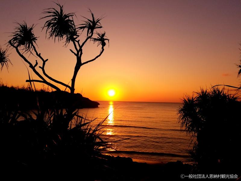 ②優秀賞 海に沈む夕日とアダンの木